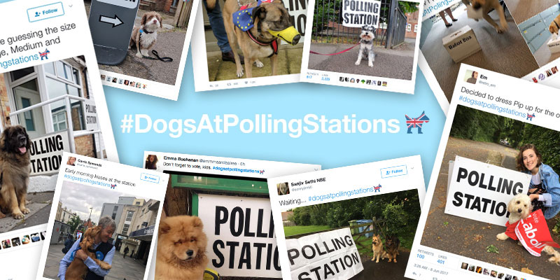 #DogsatPollingStations on Election Day Thursday 8th June 2017 image
